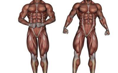 Stretching addominali: gli esercizi più efficaci